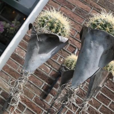 plantschikking3